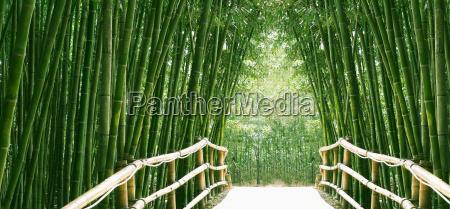 bamboo avenue